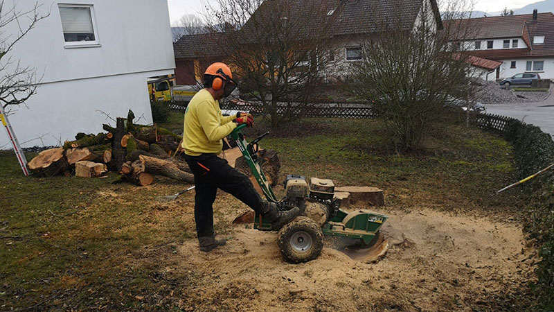 Baumpflege Matt Murg - Oberhof