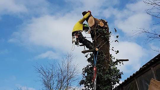 Spezialfällungen Baumpflege Matt Murg - Oberhof